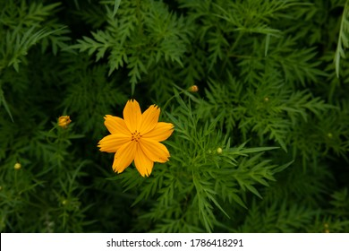 yellow starburst flowers  on  green background. floral nature background with green leafs