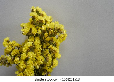 Statice flower images stock photos vectors shutterstock yellow statice flower on white background statice is grown as both a cut flower and mightylinksfo