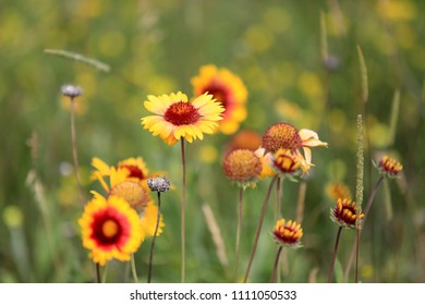 Yellow summer flowers on meadow