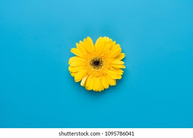 A yellow sun flower on a blue background