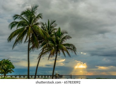 The yellow sun rays trying to break through the gray and blue cloudy skies behind palm trees on a South Florida beach one summer morning