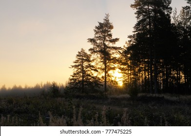 Yellow sunet in fir forest landscape