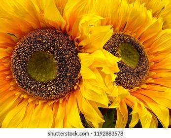 Yellow Sunflower Arrangement
