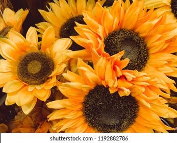 Yellow Sunflower Display
