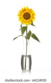 Yellow sunflower on vase with water isolated on white background