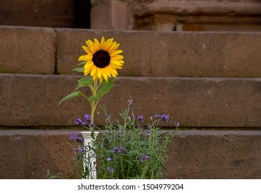 yellow sunflower in vase with purple wildflower bouquet on stone wall background