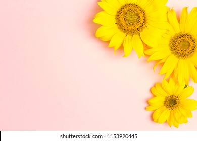Yellow sunflowers on pink background with copy space. Top view.