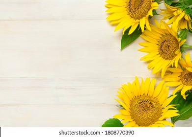 Yellow sunflowers on white wooden background top view copy space. Beautiful fresh sunflowers, yellow flowers bouquet. Harvest time, farming, Agriculture, autumn or summer floral background