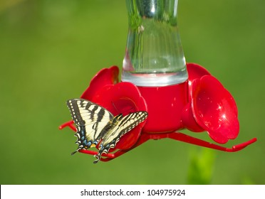 Yellow swallowtail butterfly feeding at a hummingbird feeder, with copy space.