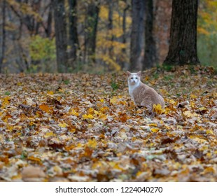 yellow tabby cat sitting in woods surrounded by fall colors in autumn