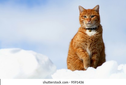 Yellow Tabby sitting in snow resembling clouds