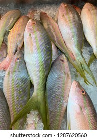 Yellow tail snapper on ice at fish market
