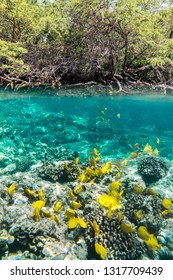 Yellow Tangs, Underwater Paradise, Big Island Hawaii