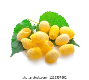 yellow thai silkworm cocoons pile isolated on white background.