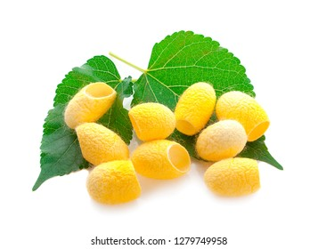 yellow thai silkworm cocoons pile isolated on white background