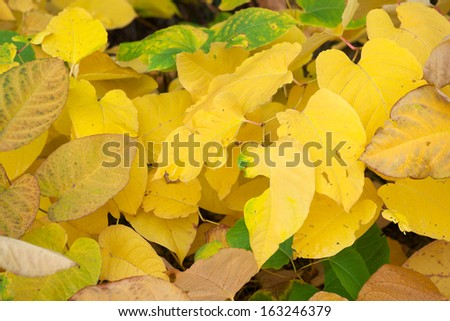 yellow thumbing
