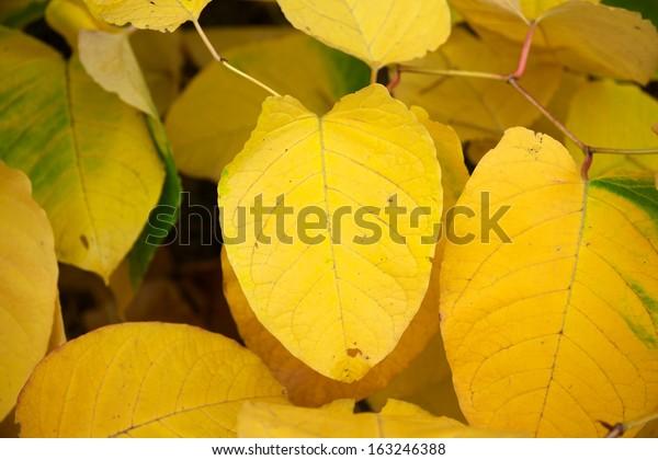 yellow thumbing