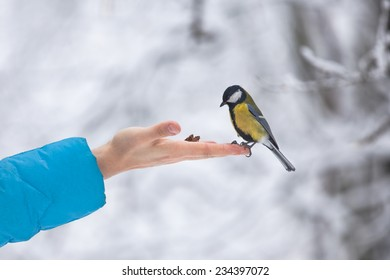 Yellow tit bird sits on the hand curiously looking ready to eat nuts