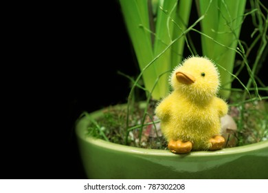 a yellow toy Easter duck with spring plants hyacinth and black background, the plant is a Hyacinth, we see the  leaves,  the  colors on the photo are green and yellow.The duck is isolated, horizontal,