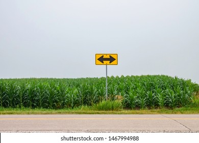 Yellow traffic sign with black arrows pointing left and right before a field of corn (maize) along a county road on an overcast morning in Iowa, USA, for concepts of necessity, alternatives, decisions
