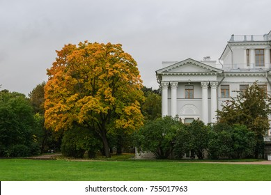 Yellow tree against a white ancient building in the park