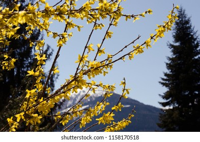 Yellow tree branch on Alps background, beautiful views