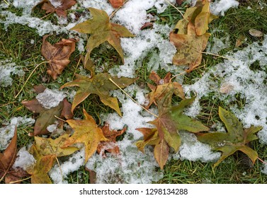 Yellow tree leaves in the snow