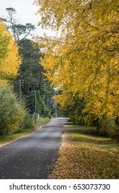 yellow trees along the road in the autumn