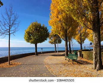 Yellow trees and lake. Geneva lake or Lac Leman in late summer and beginning of autumn in Lausanne, Switzerland