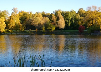yellow Trees over the Water with autumn Foliage. Beautiful Reflection of a Tree on the Lake surface. crowns of trees reflected in the smooth surface of the lake