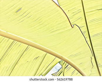 Yellow tropical leaf abstraction. Banana leaf closeup horizontal image. Botanical digital illustration. Environment design template. Tropical leaves on sky background. Exotic plant leaf texture banner