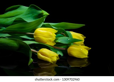 Yellow Tulip Bouquet closeup reflecting on water - isolated on black
