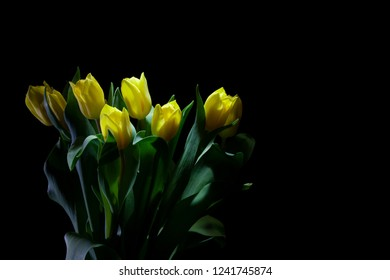 Yellow Tulip Bouquet closeup under a low light on black background