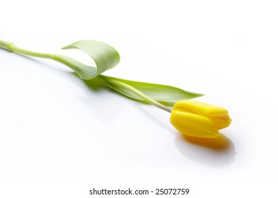 Yellow tulip isolated with shadow