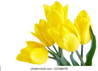 Yellow tulips and gold ribbon