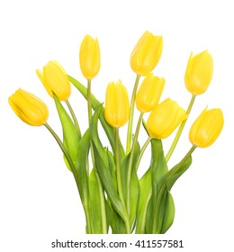 Yellow Tulips isolated on white. Mother's day