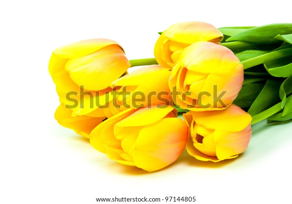 yellow tulips isolated on white background