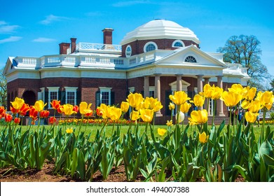 Yellow tulips with Monticello Home in background - Spring Garden in Charlottesville, Virginia