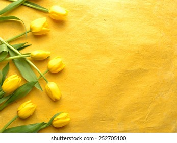 Yellow tulips on yellow background