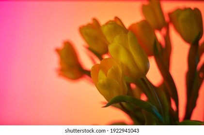 Yellow tulips on a blue, purple, orange, yellow, green blurred bokeh background with space for text