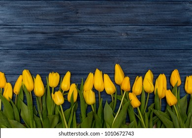 Yellow tulips on blue wooden background. Spring background with tulips, copy space for text. Flat lay, top view.