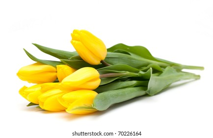 yellow tulips on white