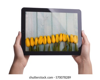 Yellow tulips on a wooden blue background with sparkles. Holding tablet in hands isolated on white.