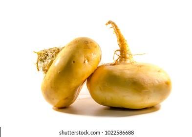 Yellow turnip isolated background