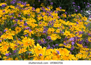 yellow and violet flowers field