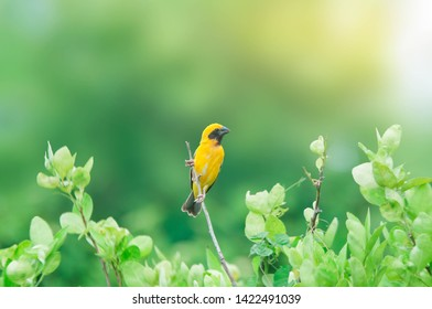 Yellow warbler perched on a beautiful branch