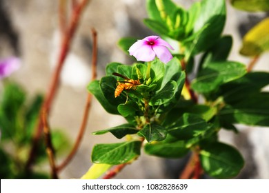 Yellow wasp with flower