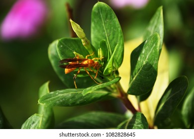 Yellow wasp in leaves