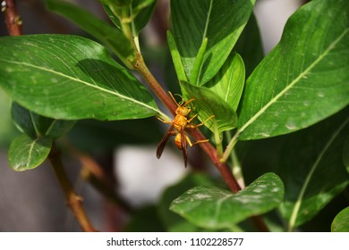 Yellow wasp on a green plant