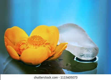 A yellow Water lily (nenuphar) and a white stone with water drops on a blue background. Spa and health concept.